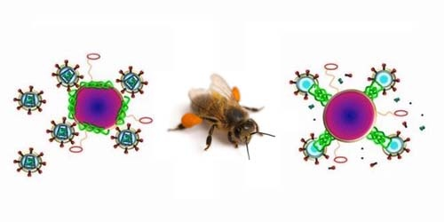 Racun Sengatan Lebah Ternyata Mampu Bunuh Virus HIV | Berita Terbaru 2013