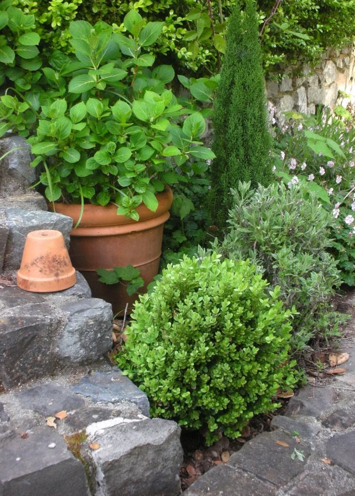inspiration: Gardens Ideas, Soft Pink, Pots Hydrangeas, Pink Geraniums, French Lavender, Geraniums Biokova, Backyard Gardens, Outdoor Yard Gardens, French Country Gardens