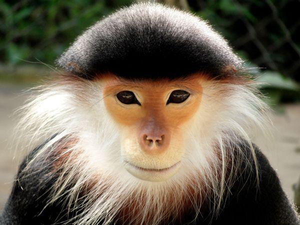 monkey: Animals, National Geographic, Creatures, Primate, Photo, Monkey