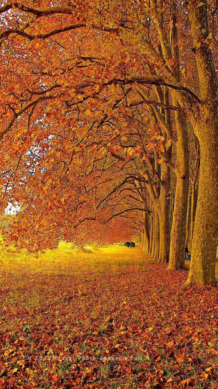 Beautiful Lausanne in Autumn, Switzerland ~ 4 Season World