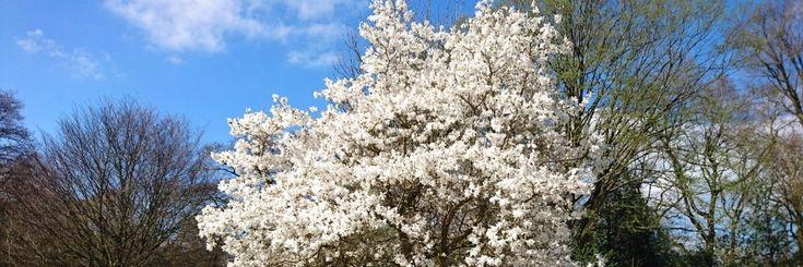 17 beste idee n over n boom op pinterest one tree hill nathan scott en haley james scott - Gemengde babykamer idee ...