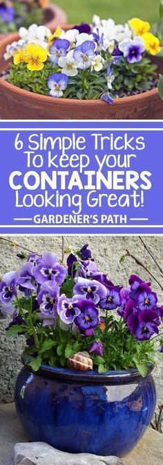 You don't have to be disappointed with planters that fizzle out by mid-summer again this year. For outstanding results, follow our basic steps to create containers full of vibrant, healthy plants – and use our easy trick to produce a fantastic display of color and form from spring right through to fall! Read more now on Gardener's Path. #Containers
