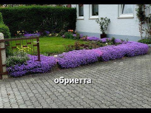Знакомимся - почвопокровные растения, их название, фото. Часть 2