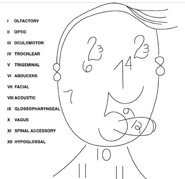 679 best Nursing Mnemonics & Guides images on Pinterest