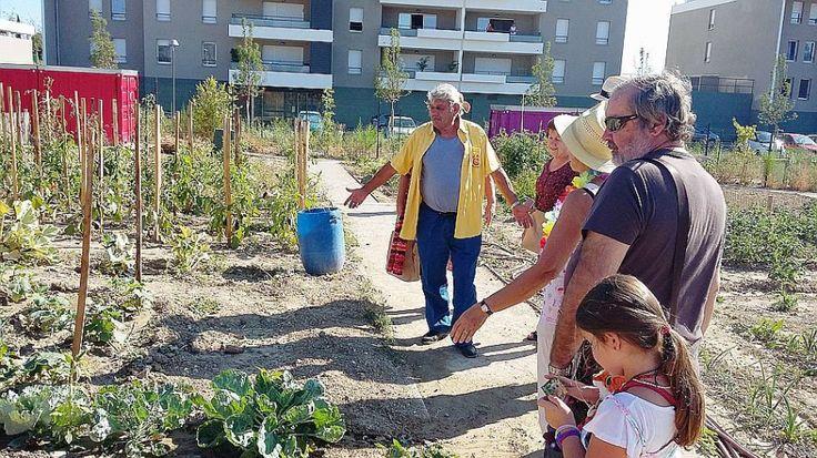 En plein milieu des logements de standing de la rue Copernic à Château-Gombert, les jardins partagés cultivent l'art de vivre ensemble. PHOTOS DR