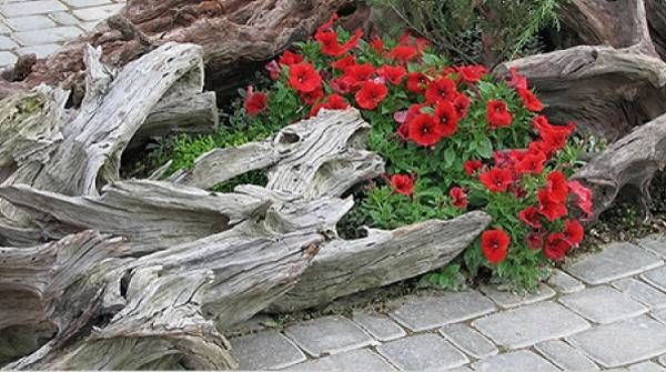 Garden design with unique root art decorations can impress and amaze. Garden design ideas recycling dead tree roots look creative and surprising. Artworks and unusual containers for flowers made of tree roots personalize yard landscaping ideas, bringing a lyrical mood or stimulating a playful atmosp