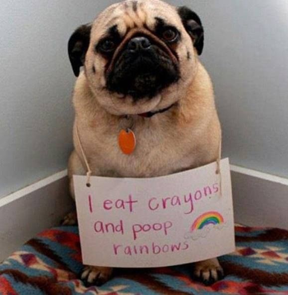 I Eat Crayons And Poop Rainbows