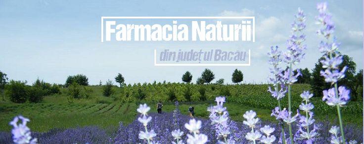 Farmacia Naturii din județul Bacău și pernuțele terapeutice http://platferma.ro/farmacia-naturii-pernute-terapeutice/