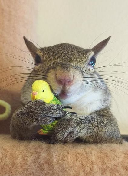This is Jill, a squirrel who was rescued during Hurricane Isaac. She now lives with her unlikely human best friend who gave her a home, and she could not be happier about it.