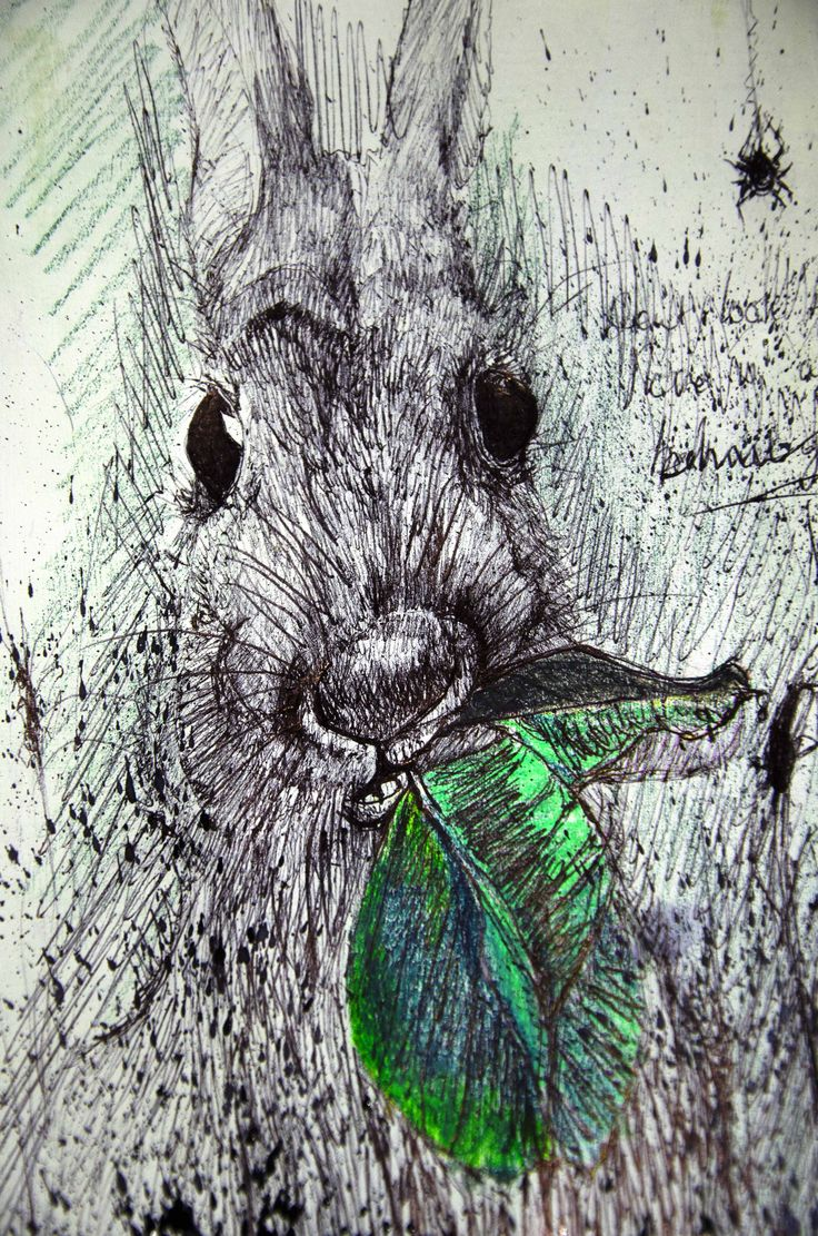 Hare drawing in pen