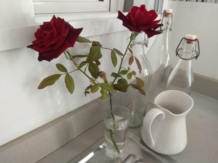 Roses, Moncofa, Spain, Nov. 2017