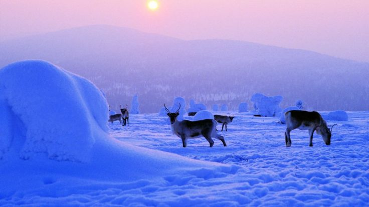 jump on a sleigh and ride them like Santa