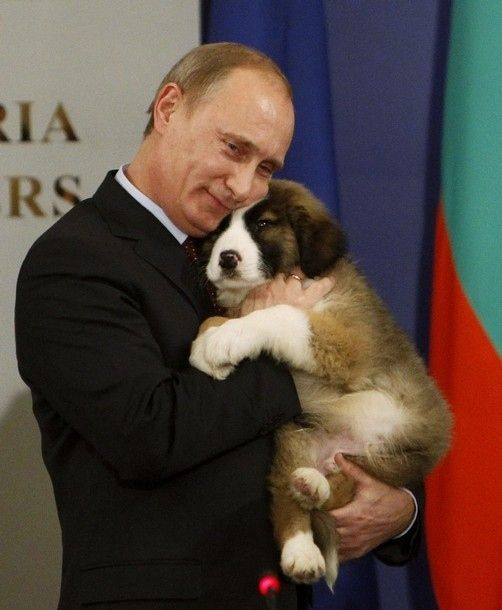 Meanwhile, in the evil Soviet empire... Aaaaw. A sweet little Bernese. :)