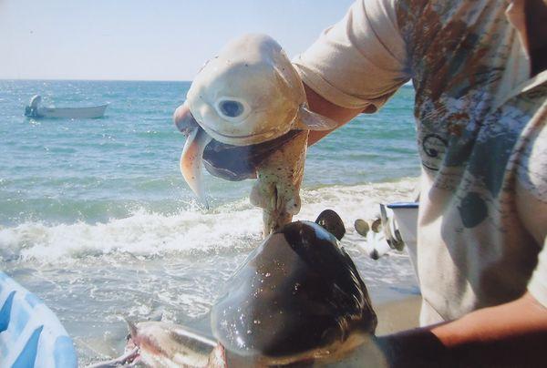 one eyed shark