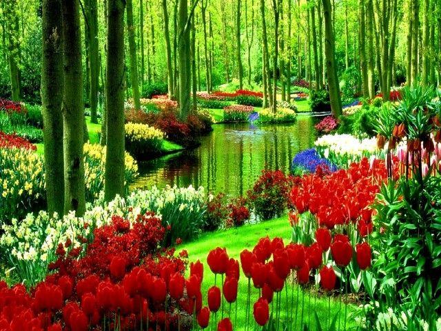 Q lindo jardin
