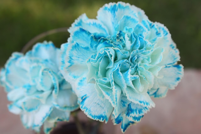 white carnations in blue water - Maybe soft baby blue with red & white to soften the colors for shower??