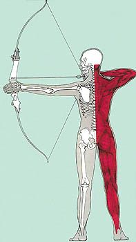 Archery Muscle Power  To prevent injuries, improve accuracy, and become a lucky  bowhunter, follow these steps to strong shoulders.