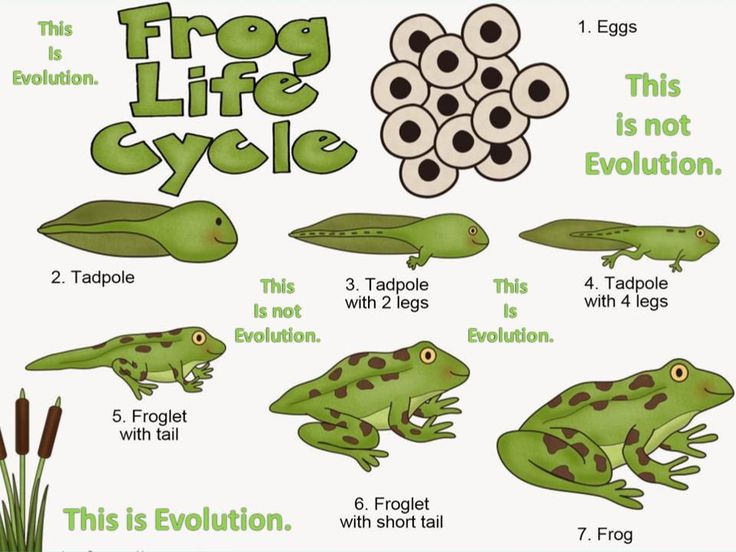 This is not Evolution. But this is Evolution.