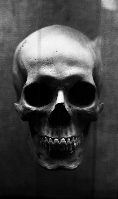 Human Jaw Tattoo: 23 Best Skeletons Images On Pinterest