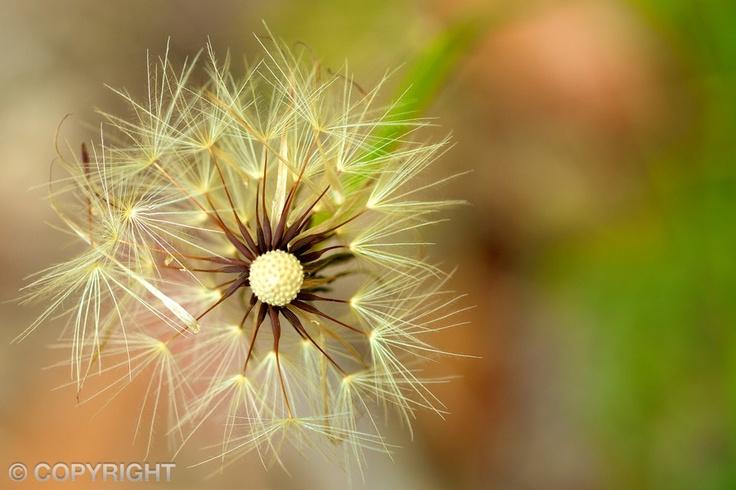 Quiet Moments | www.dgapphotos.com