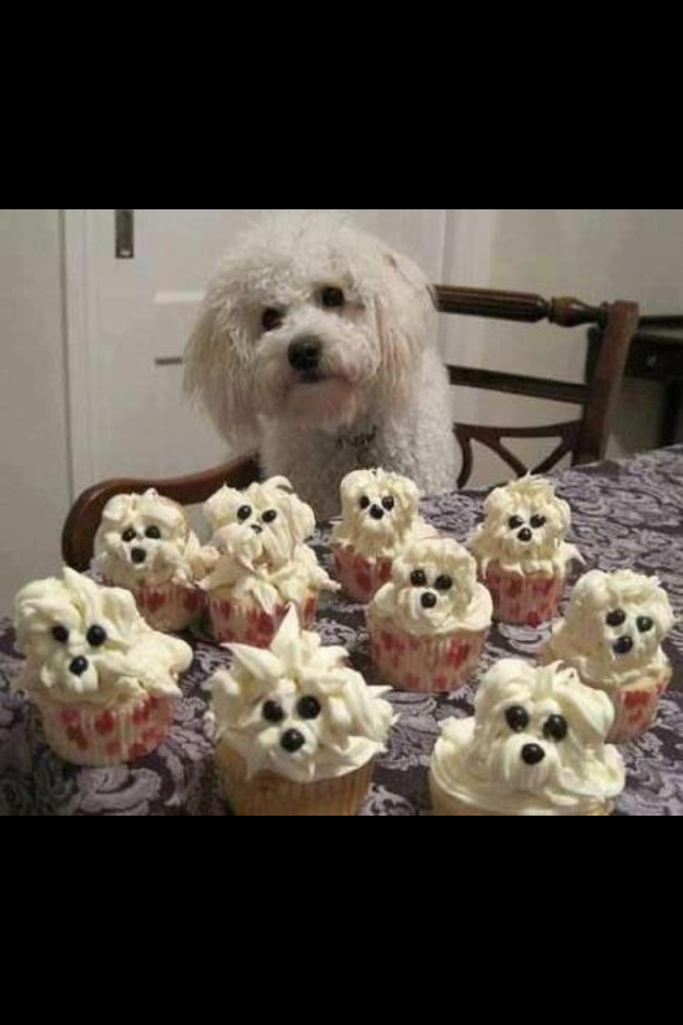Cakes Puppies Can Eat