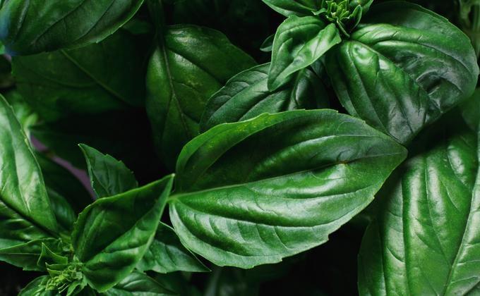 Conselhos para ter seu próprio jardim de ervas   eHow Brasil