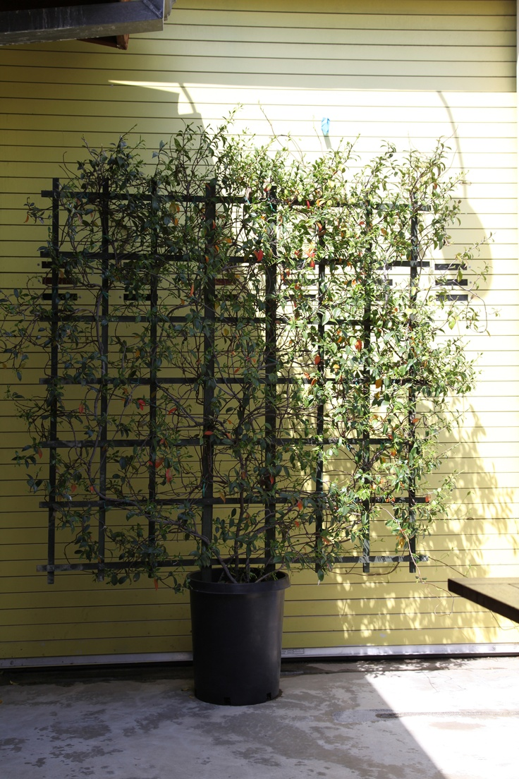 290 Best Images About Beautiful Trellis Privacy Screens