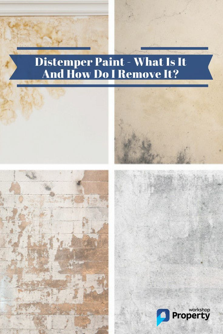 How To Remove Distemper Paint In 7 Steps Property Workshop Distemper Paint Wallpaper Old Interior Wall Paint