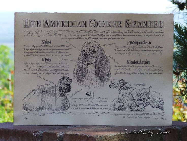 Antique styled dog standard - American Cocker Spaniel by Creativedoglover on Etsy