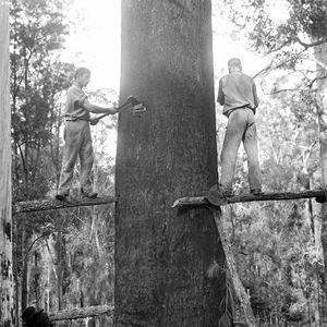 Tree felling was a necessary yet dangerous past-time