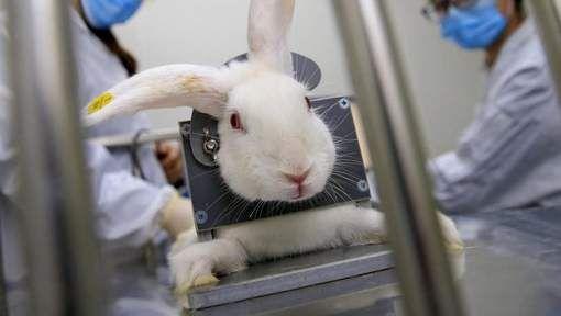 Groen pleit voor heffing op dierproeven - HLN.be