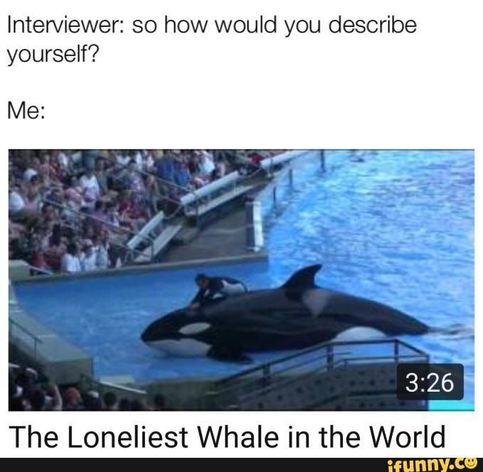 Interviewer So How Would You Describe Yourself Me The Loneliest Whale In The World Ifunny Memes Describe Yourself Tumblr Funny