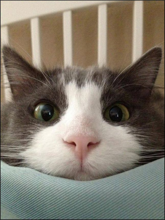 Hehehe it's a cat:) everyone follow emma! Her username is emmanicole222 and she is one of the people I am following! Her profile pic is some purple flowers:):) please follow her she wants to get a lot of followers! Yay! So if all of u go and follow Emma she would be so happy! Her username is emmanicole222 repost this please!! Original pinner: Ariana Grande (heyyitsariana)