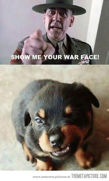 war face: Puppies Faces, Rottweilers Puppies, Little Puppies, Funny Dogs, Funny Pictures, So Cute, Jackets, Dogs Pictures, War Faces