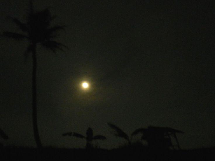 Field in the night, pemandangan sawah padi pada waktu senja