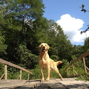 Murphy #goldenretriever #dog FEED | Webstagram - the best Instagram viewer: Instagram Viewer, Dog Murphy, Dog Feed