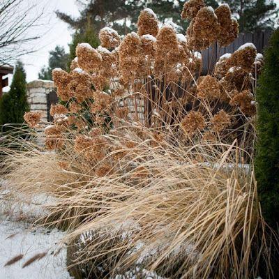 Orzeszkowe Pole: 15 roślin pięknych jesienią