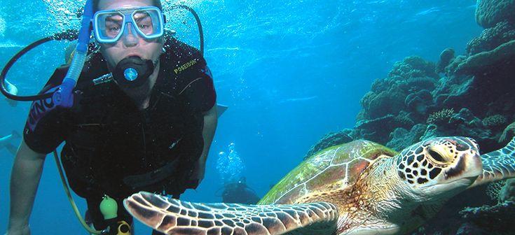 Poseidon tour from $236 Visit http://www.fnqapartments.com/tour-poseidon/area-cairns/  #cairnstourpackages