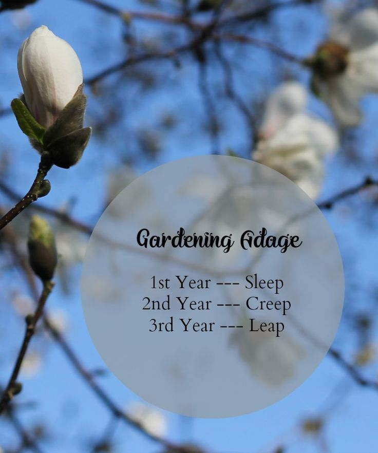 7 Gardening Rules of Thumb For New Plants - Garden Adage Rule of Thumb