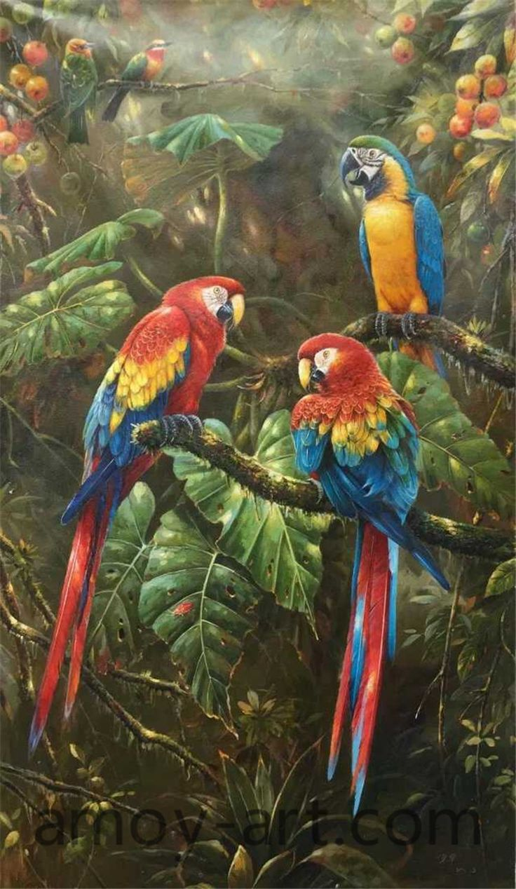 14 best images about Parrot oil paintings on canvas from ...