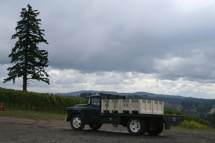 """The Fairsing Vineyard """"Grape Hauler"""" (1956 Chevrolet) off to deliver fruit to an Oregon winery."""