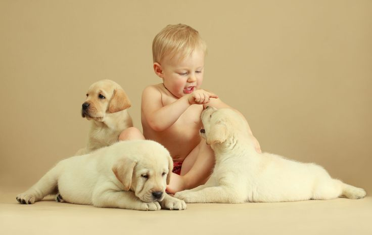 Science Throws You a Bone, Suggests Pregnant Women Who Get Dogs Have Healthier Babies