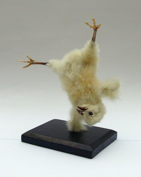 "Artist says: ""I do not harm any animals for my taxidermy, all used chickens are a byproduct of the egg industry."""