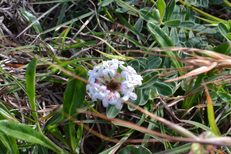 We believe this is a Rice flower but unsure, any help to identify this tiny flower appreciated.