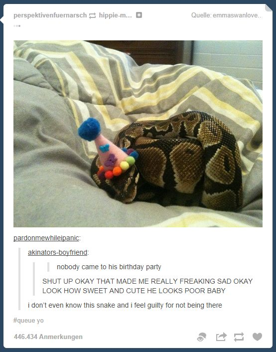 Very Funny Memes Tumblr : Tumblrs best snake birthday party tumblr what do you