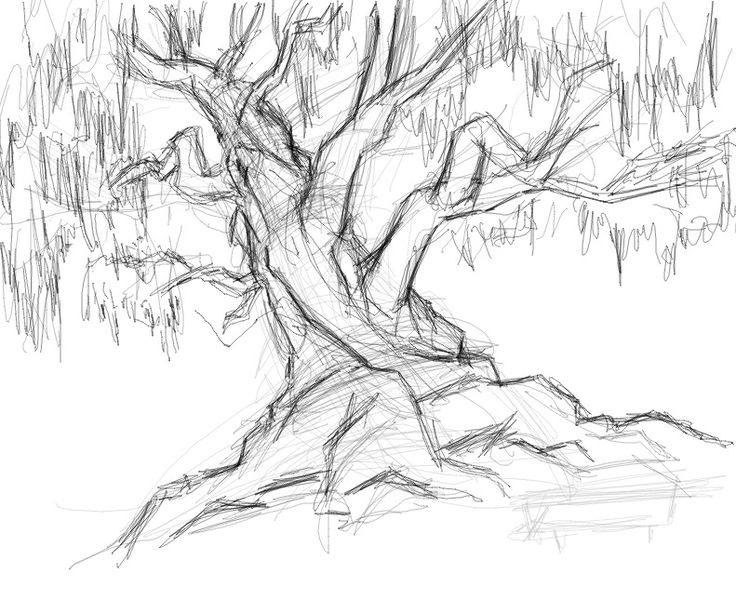 Tree Drawings 21 best how to draw trees images on pinterest | drawing trees