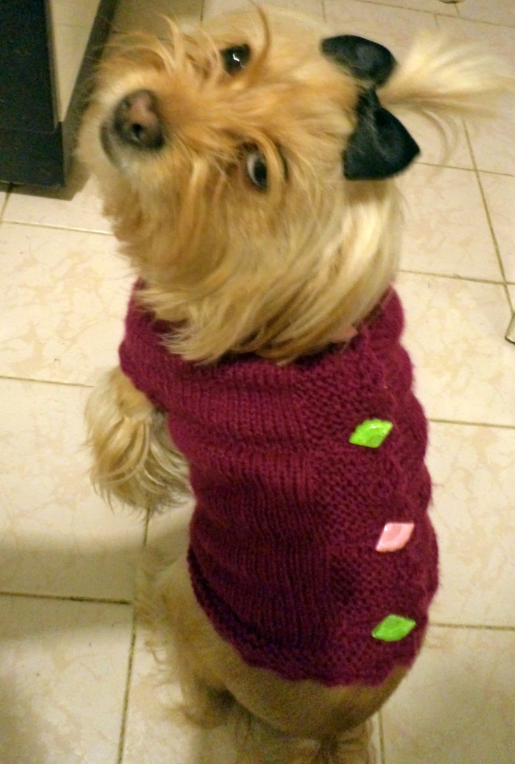This is my sweet girl Foxy's knitted sweater..