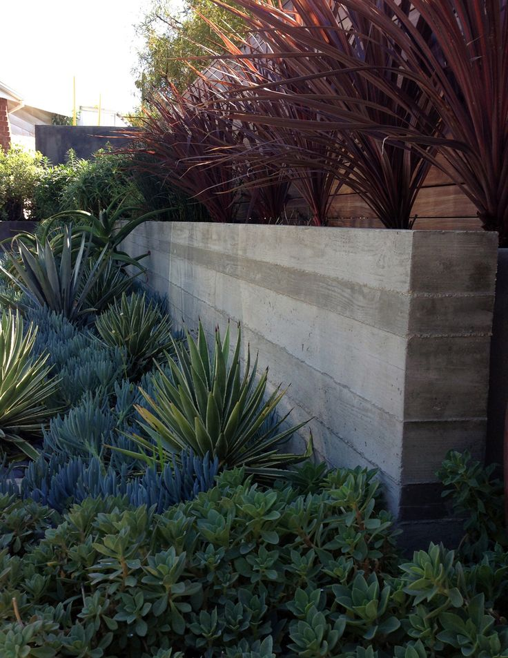 michael fiore landscape design / briar summit residence, lax. Raw concrete wall & foundation planting. Great mix of textures and colours
