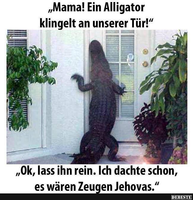 Mama! Ein Alligator klingelt an unserer Tür! | Lustige Bilder, Sprüche, Witze, echt lustig