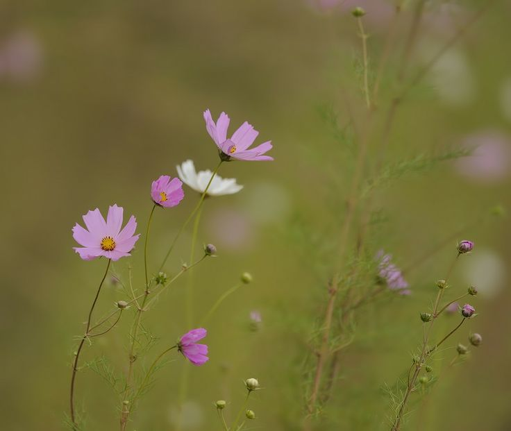 Cosmos by Wolf Avni. #photography #Drakensberg http://www.n3gateway.com/news5/2/151/Wolf-Avni/d,detail.htm